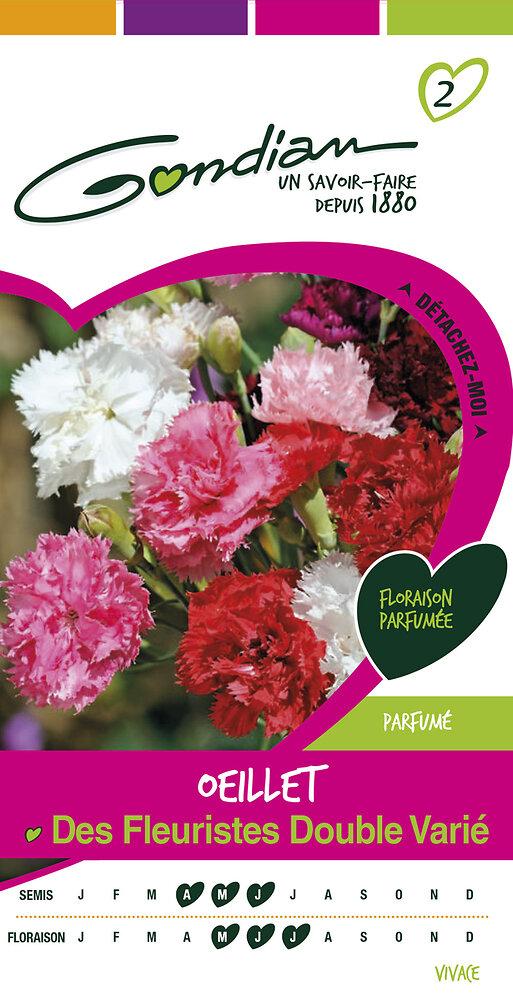 Oeillet des fleuristes double varie