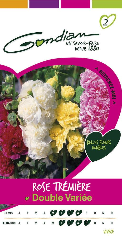 Rose trémière double variée