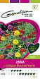 Zinnia lilliput double varié