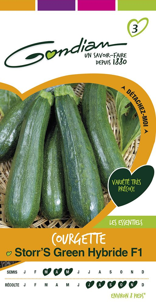 Courgette storr's green hybride f1