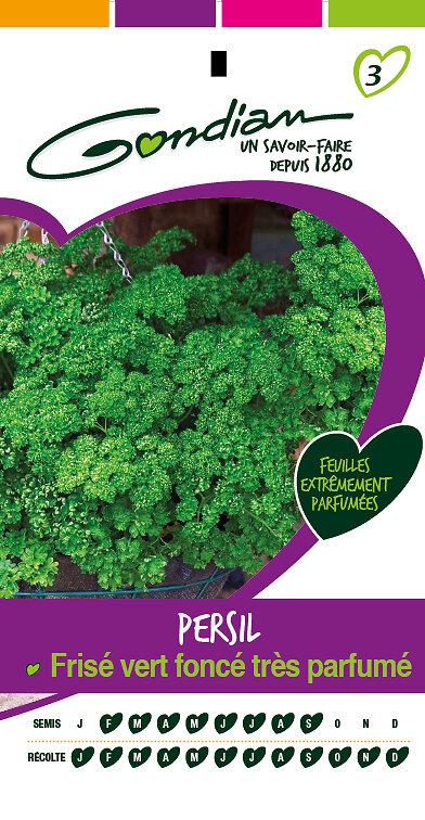 Persil frisé vert foncé très parfumé