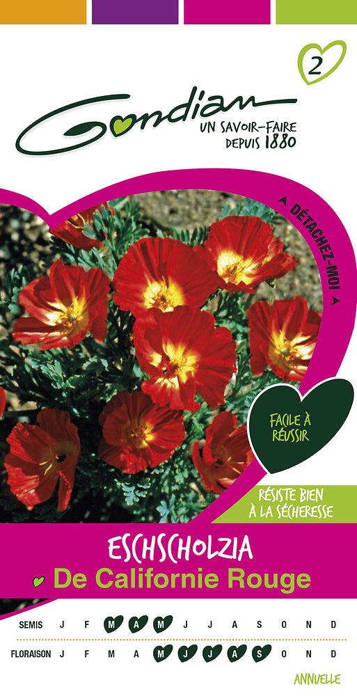 Eschscholzia de Californie rouge