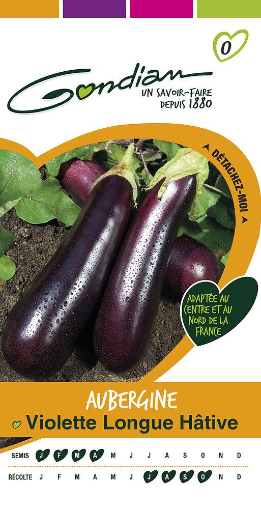 Aubergine violette longue hâtive